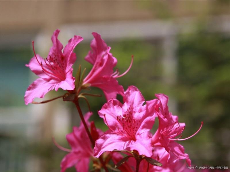 Image result for 세계에서 가장 아름다운 수정꽃
